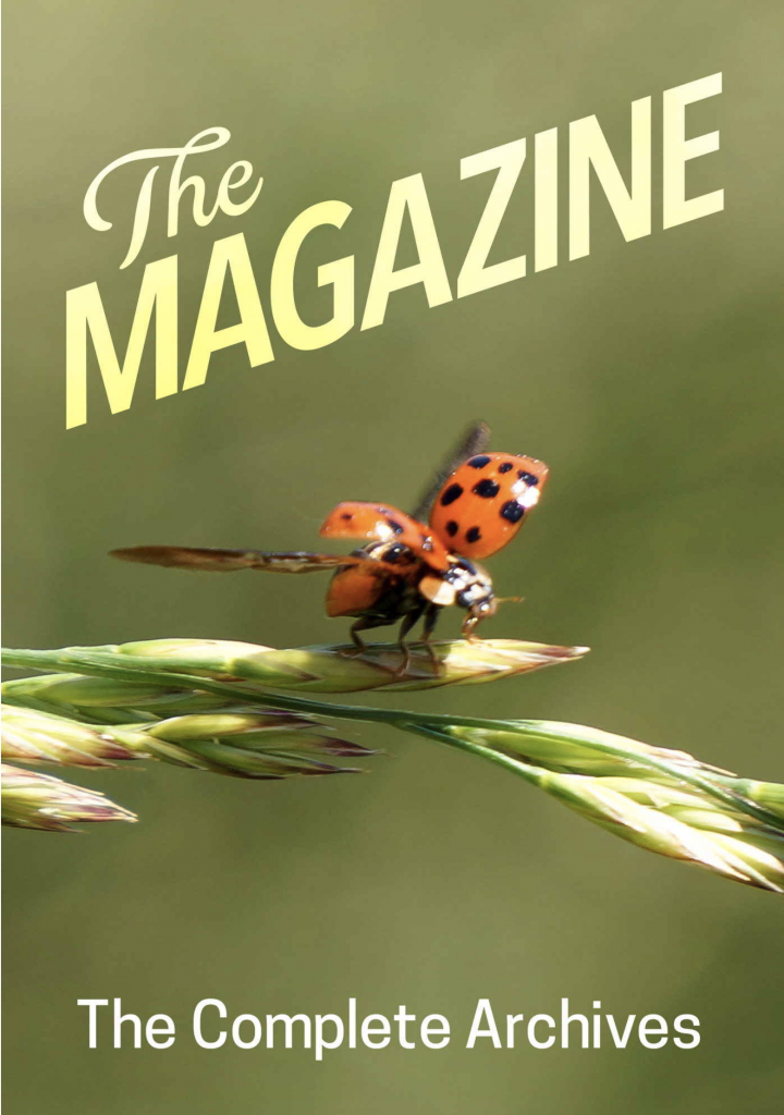 Cover for The Magazine: The Book. It shows a ladybug taking flight from a stalk of grass, with fancy lettering reading: The Magazine. Below that, The Complete Archives.